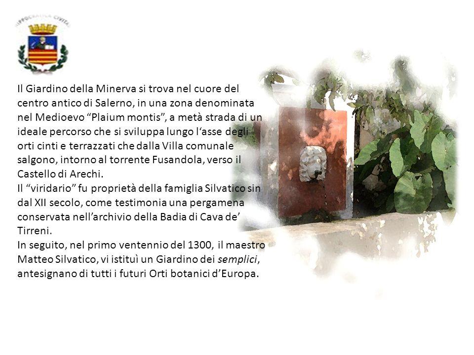 Il Giardino della Minerva si trova nel cuore del centro antico di Salerno, in una zona denominata nel Medioevo Plaium montis , a metà strada di un ideale percorso che si sviluppa lungo l'asse degli orti cinti e terrazzati che dalla Villa comunale salgono, intorno al torrente Fusandola, verso il Castello di Arechi.