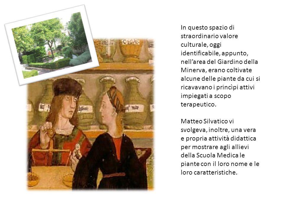 In questo spazio di straordinario valore culturale, oggi identificabile, appunto, nell'area del Giardino della Minerva, erano coltivate alcune delle piante da cui si ricavavano i princìpi attivi impiegati a scopo terapeutico.