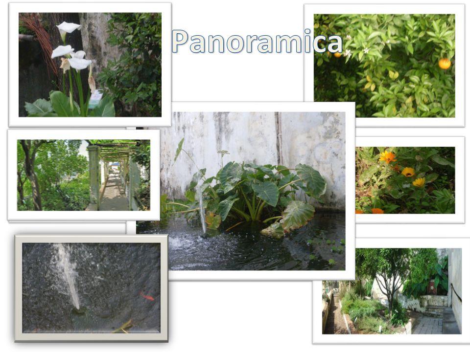 P anoramica