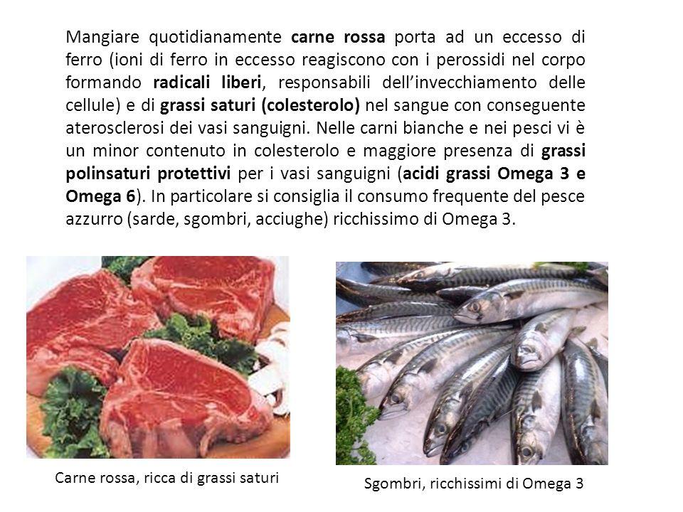 Mangiare quotidianamente carne rossa porta ad un eccesso di ferro (ioni di ferro in eccesso reagiscono con i perossidi nel corpo formando radicali liberi, responsabili dell'invecchiamento delle cellule) e di grassi saturi (colesterolo) nel sangue con conseguente aterosclerosi dei vasi sanguigni. Nelle carni bianche e nei pesci vi è un minor contenuto in colesterolo e maggiore presenza di grassi polinsaturi protettivi per i vasi sanguigni (acidi grassi Omega 3 e Omega 6). In particolare si consiglia il consumo frequente del pesce azzurro (sarde, sgombri, acciughe) ricchissimo di Omega 3.