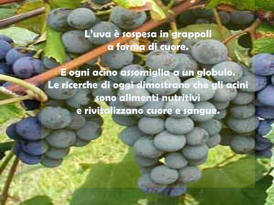 L'uva è sospesa in grappoli a forma di cuore.