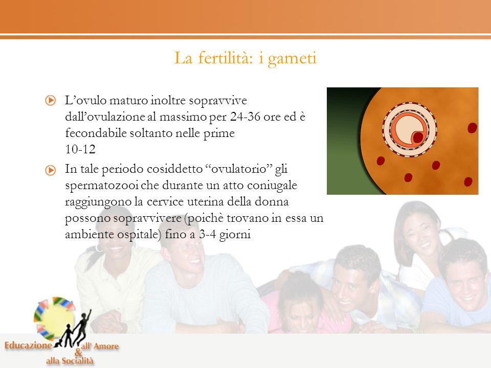 La fertilità: i gameti L'ovulo maturo inoltre sopravvive dall'ovulazione al massimo per 24-36 ore ed è fecondabile soltanto nelle prime 10-12.