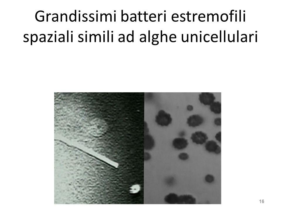 Grandissimi batteri estremofili spaziali simili ad alghe unicellulari