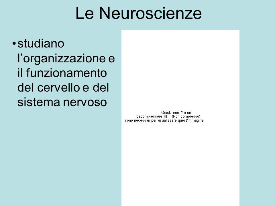 Le Neuroscienze studiano l'organizzazione e il funzionamento del cervello e del sistema nervoso