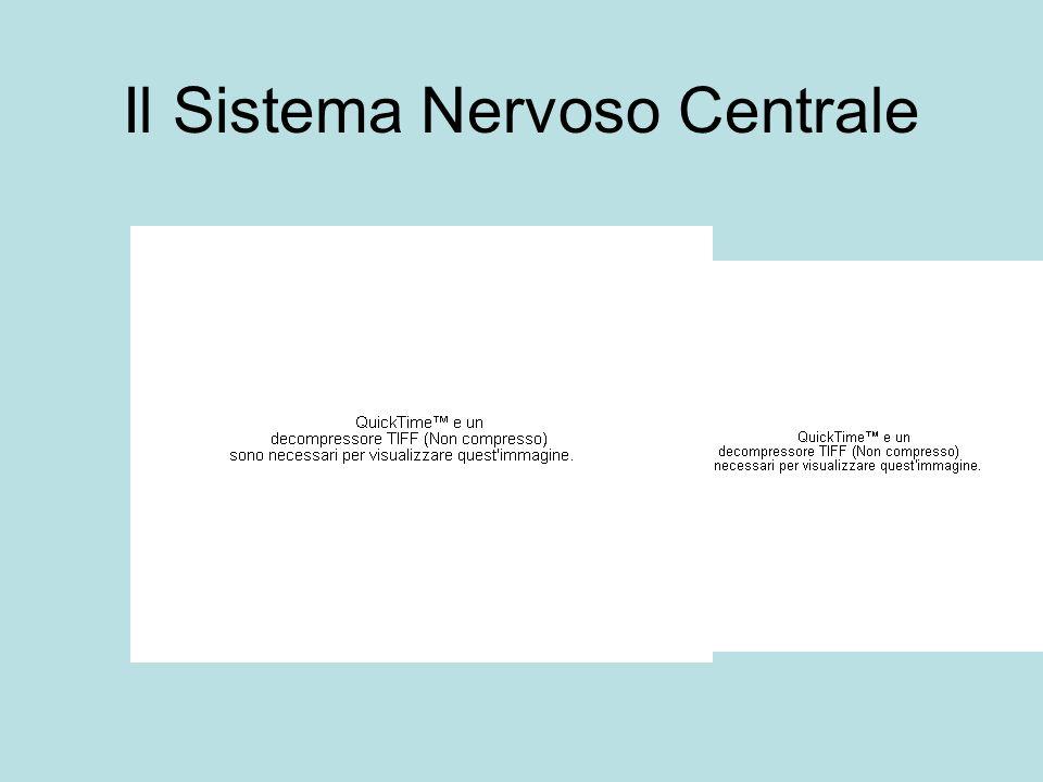 Il Sistema Nervoso Centrale