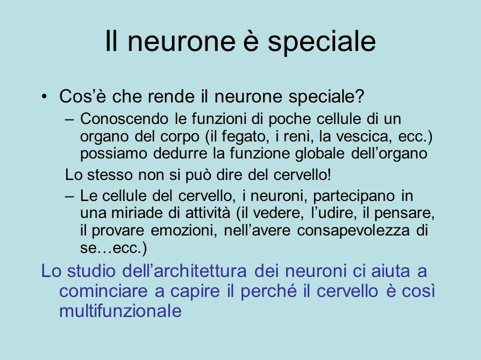 Il neurone è speciale Cos'è che rende il neurone speciale