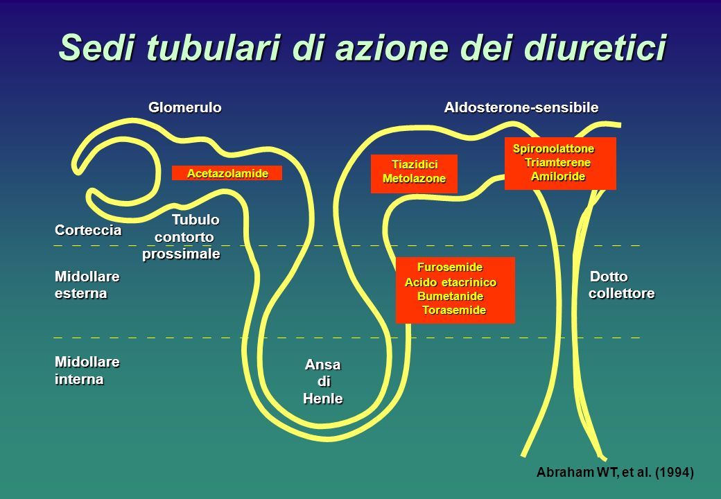 Sedi tubulari di azione dei diuretici