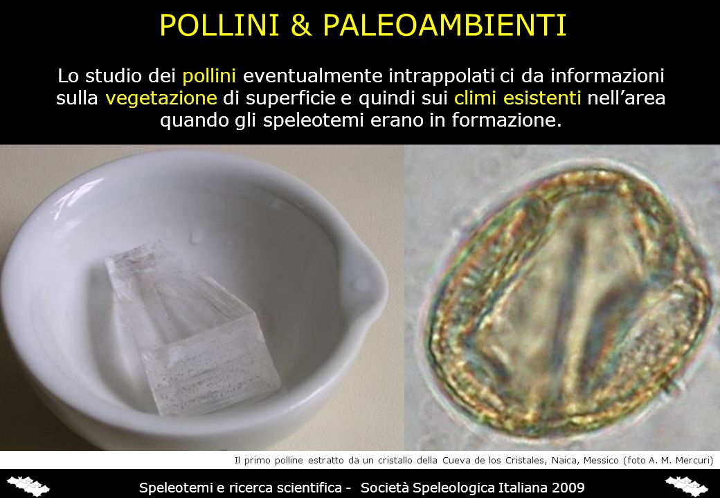 INCLUSIONI SOLIDE & PALEOAMBIENTI