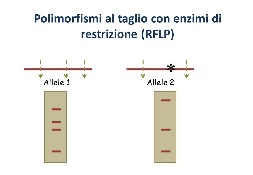 Polimorfismi al taglio con enzimi di restrizione (RFLP)