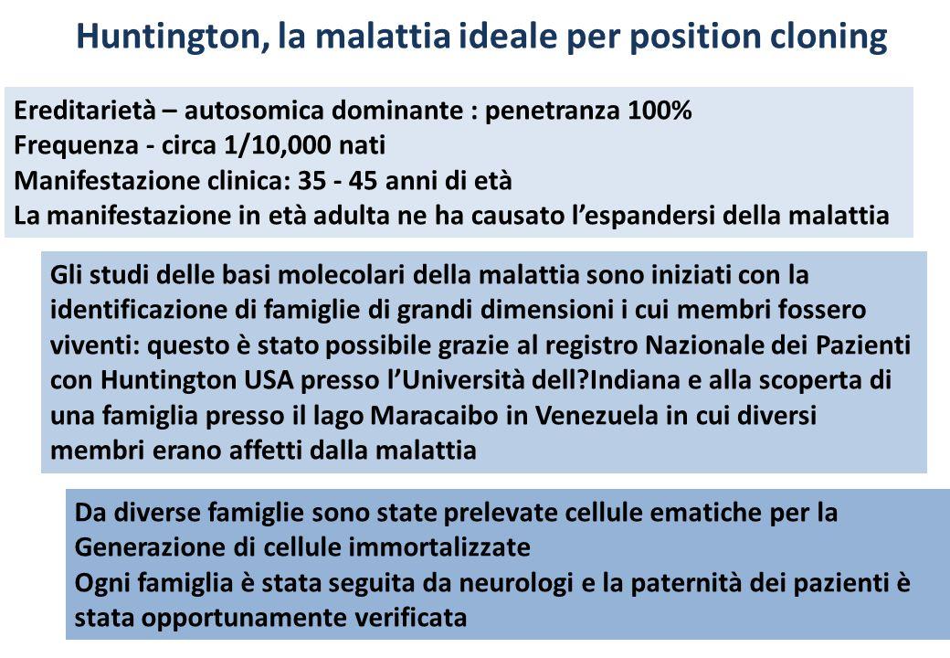 Huntington, la malattia ideale per position cloning