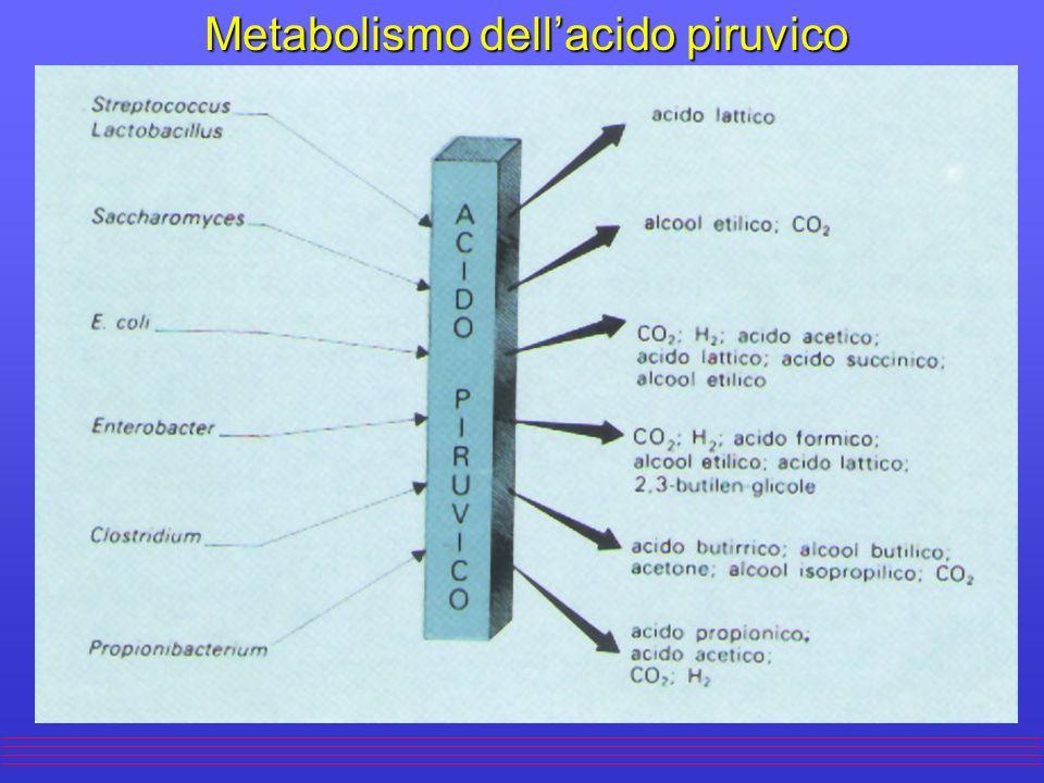 Metabolismo dell'acido piruvico