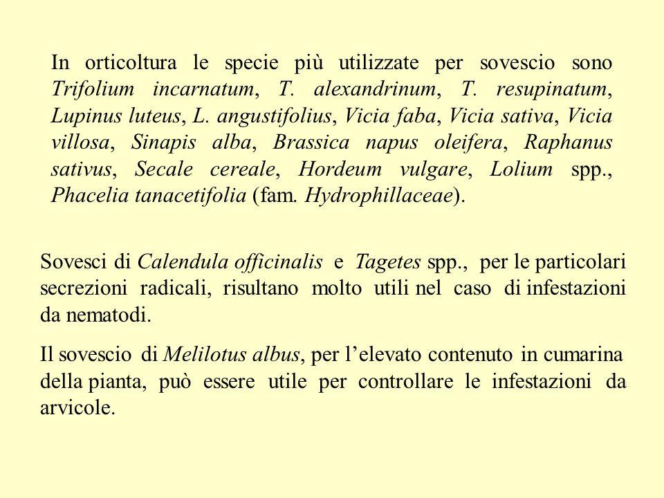 In orticoltura le specie più utilizzate per sovescio sono Trifolium incarnatum, T. alexandrinum, T. resupinatum, Lupinus luteus, L. angustifolius, Vicia faba, Vicia sativa, Vicia villosa, Sinapis alba, Brassica napus oleifera, Raphanus sativus, Secale cereale, Hordeum vulgare, Lolium spp., Phacelia tanacetifolia (fam. Hydrophillaceae).