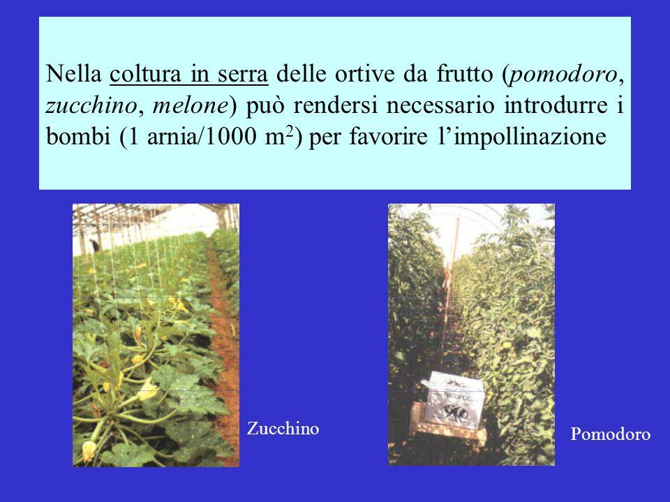 Nella coltura in serra delle ortive da frutto (pomodoro, zucchino, melone) può rendersi necessario introdurre i bombi (1 arnia/1000 m2) per favorire l'impollinazione
