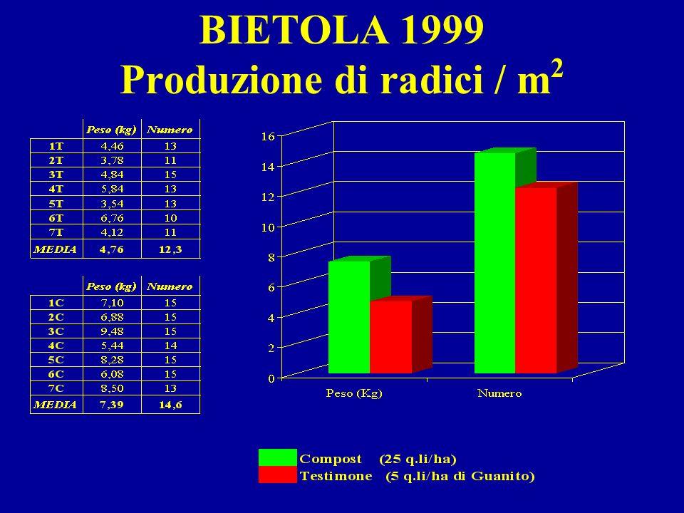 BIETOLA 1999 Produzione di radici / m2