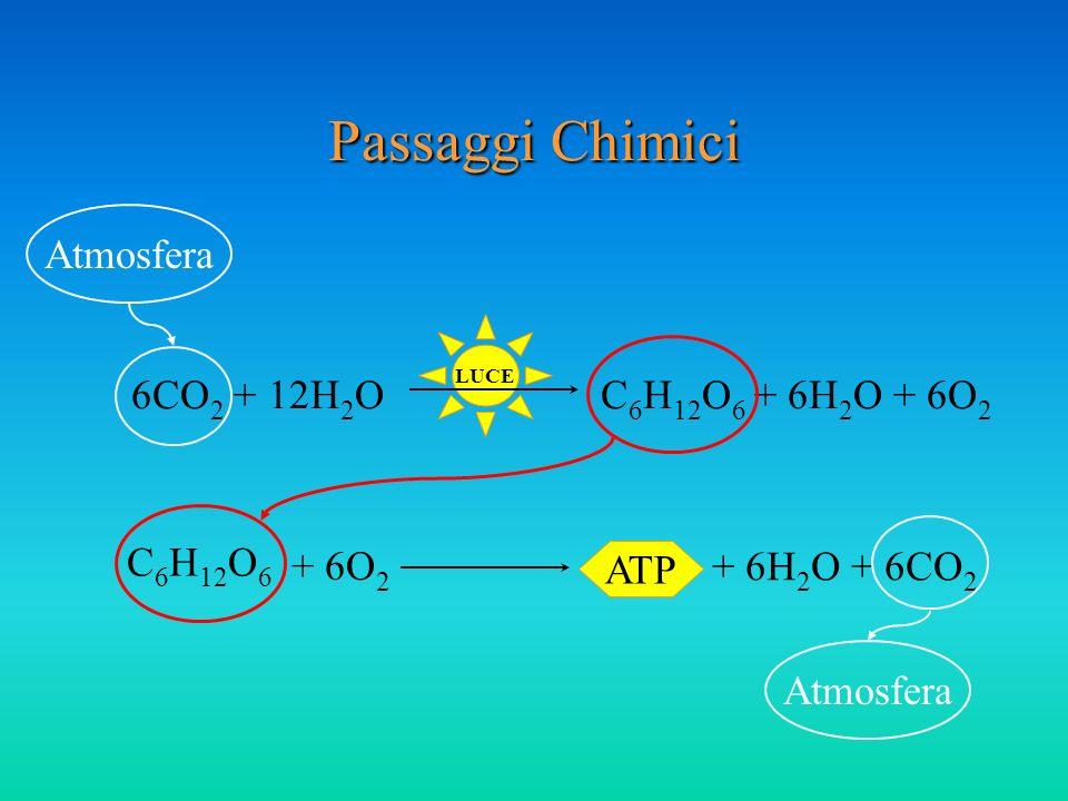 Passaggi Chimici Atmosfera 6CO2 + 12H2O C6H12O6 + 6H2O + 6O2 C6H12O6