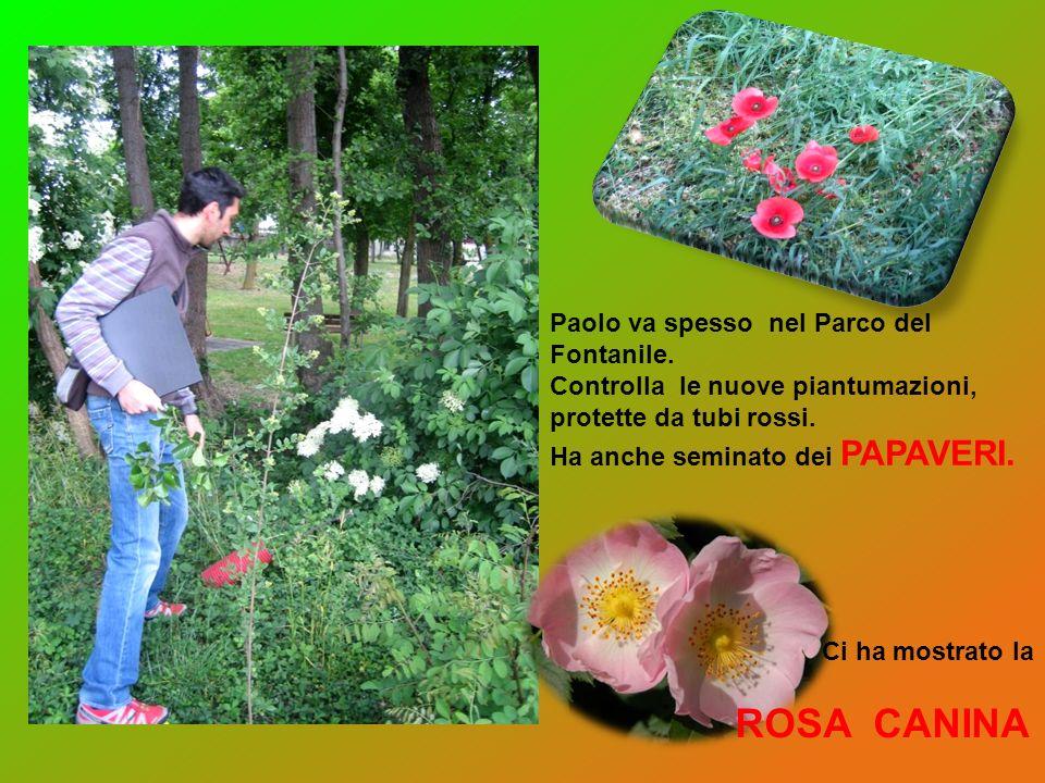 ROSA CANINA Paolo va spesso nel Parco del Fontanile.