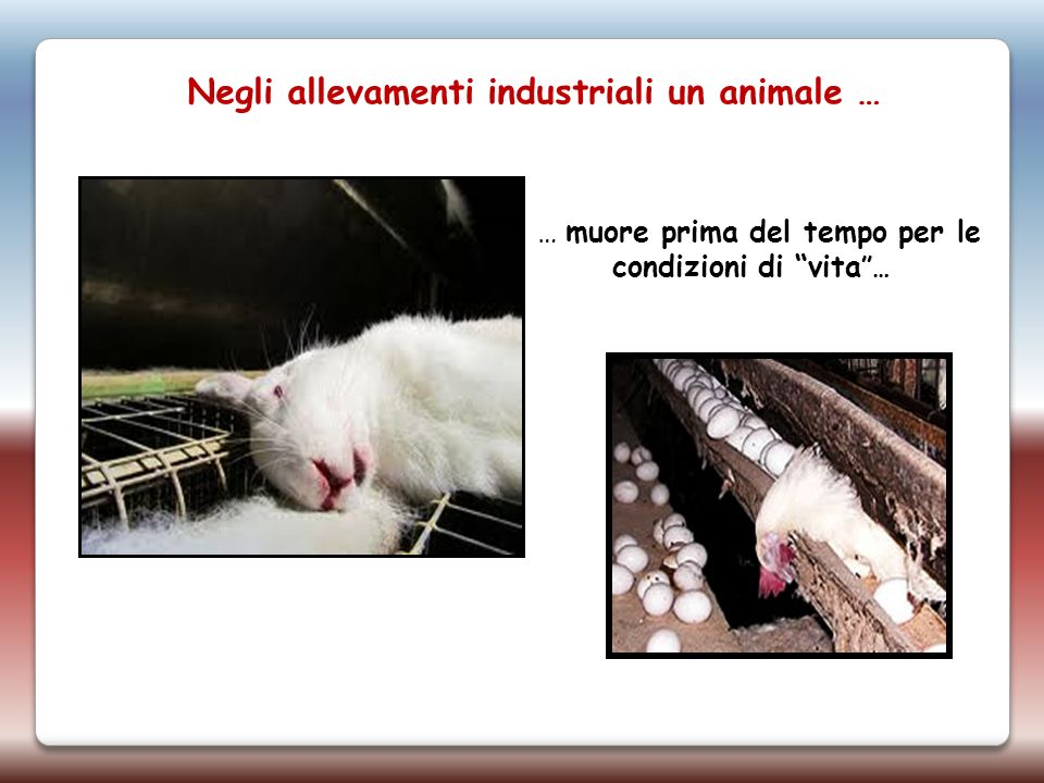 Negli allevamenti industriali un animale …
