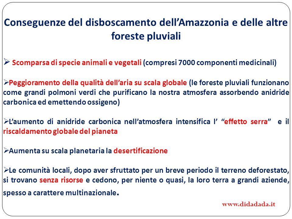 Conseguenze del disboscamento dell'Amazzonia e delle altre foreste pluviali
