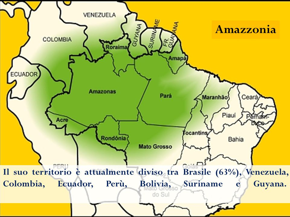 Dentro l'Amazzonia potrebbe starci buona parte dell' Europa