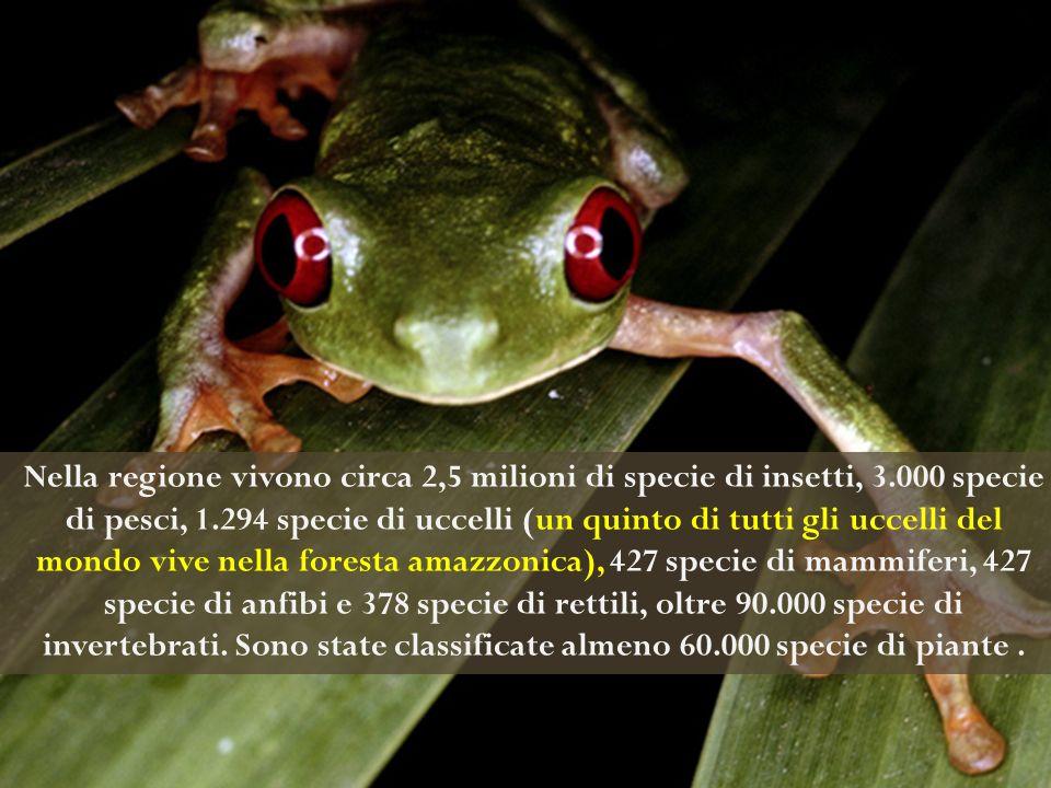 Nella regione vivono circa 2,5 milioni di specie di insetti, 3
