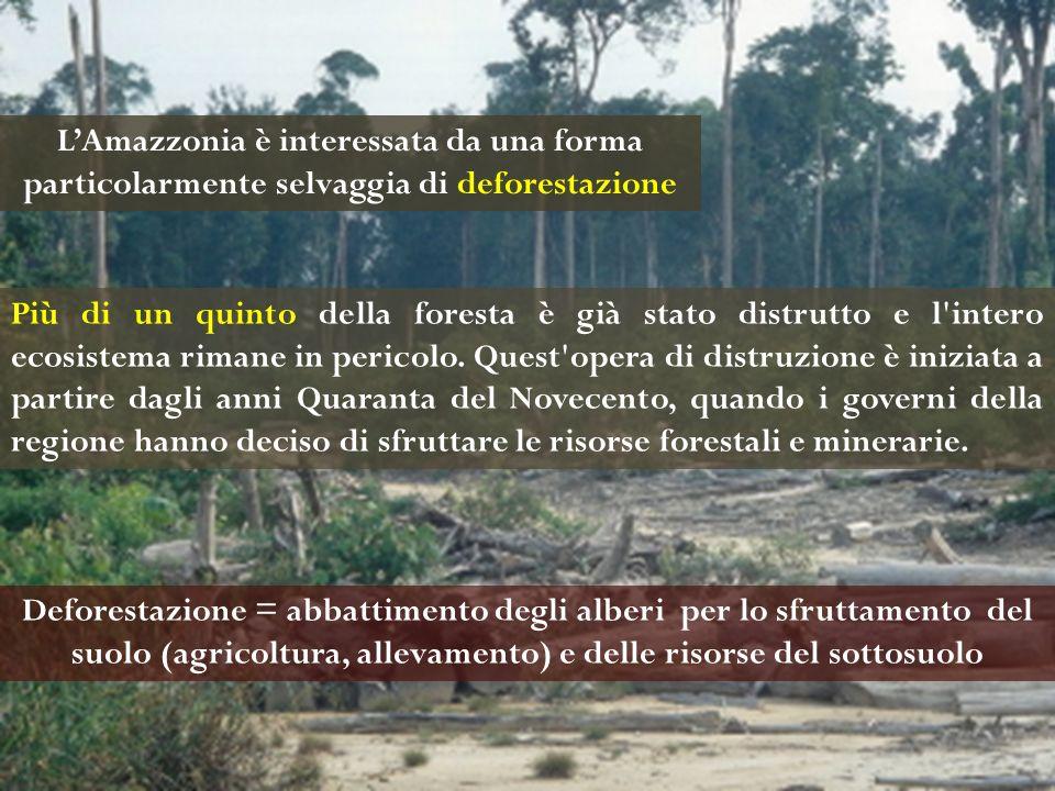 L'Amazzonia è interessata da una forma particolarmente selvaggia di deforestazione