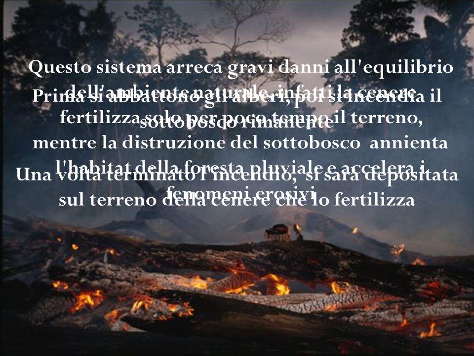 Prima si abbattono gli alberi, poi si incendia il sottobosco rimanente