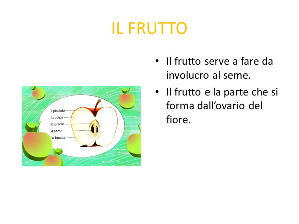 IL FRUTTO Il frutto serve a fare da involucro al seme.