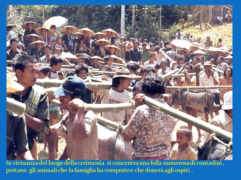 In vicinanza del luogo della cerimonia si concentra una folla numerosa di contadini , portano gli animali che la famiglia ha comprato e che donerà agli ospiti .