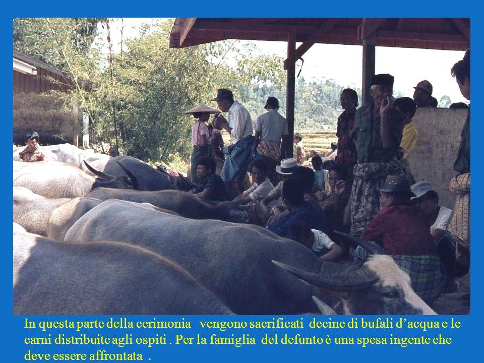 In questa parte della cerimonia vengono sacrificati decine di bufali d'acqua e le carni distribuite agli ospiti .
