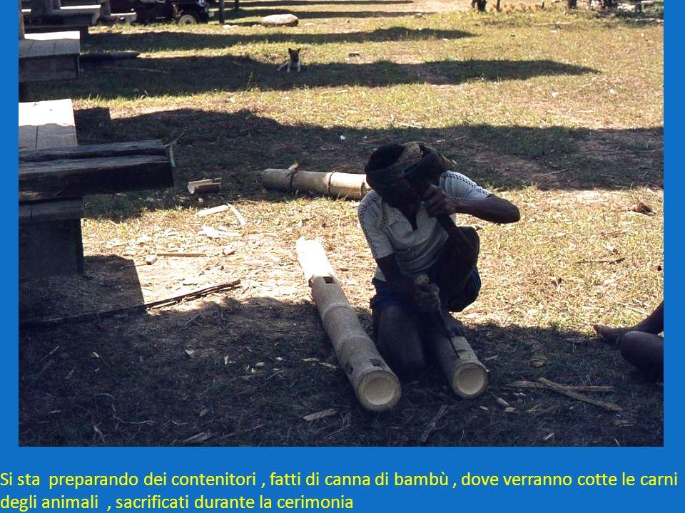 Si sta preparando dei contenitori , fatti di canna di bambù , dove verranno cotte le carni degli animali , sacrificati durante la cerimonia