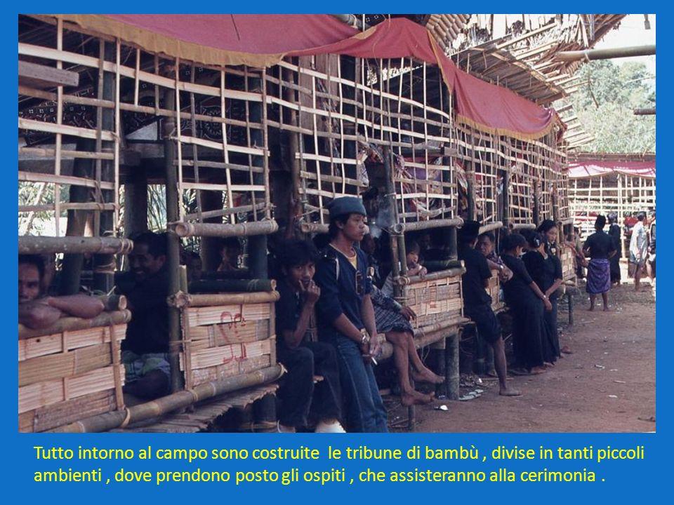 Tutto intorno al campo sono costruite le tribune di bambù , divise in tanti piccoli ambienti , dove prendono posto gli ospiti , che assisteranno alla cerimonia .