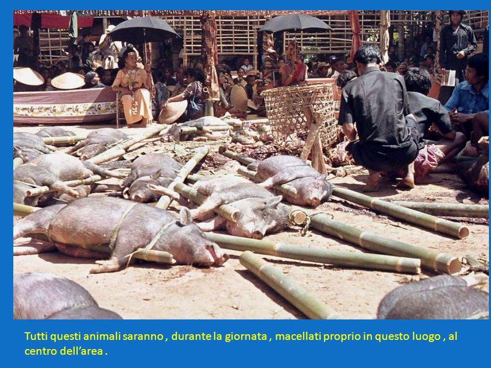 Tutti questi animali saranno , durante la giornata , macellati proprio in questo luogo , al centro dell'area .