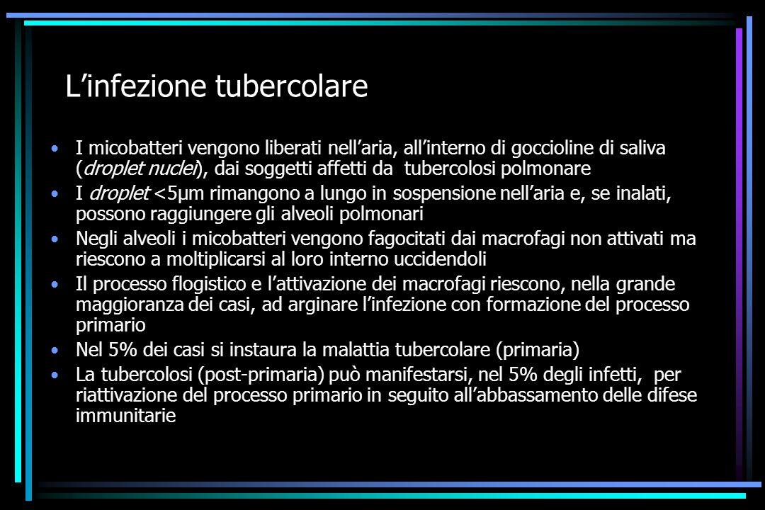 L'infezione tubercolare