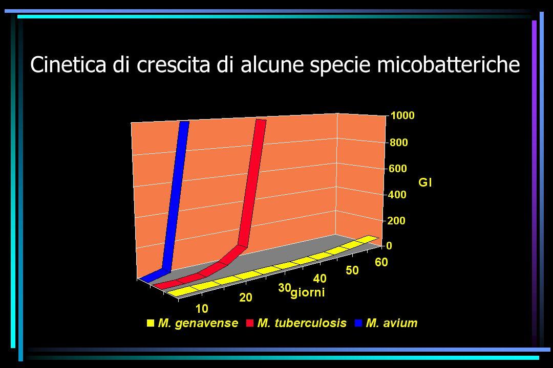Cinetica di crescita di alcune specie micobatteriche