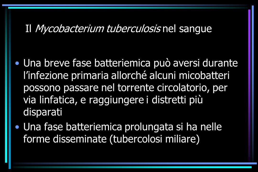 Il Mycobacterium tuberculosis nel sangue