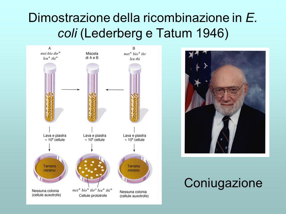 Dimostrazione della ricombinazione in E. coli (Lederberg e Tatum 1946)