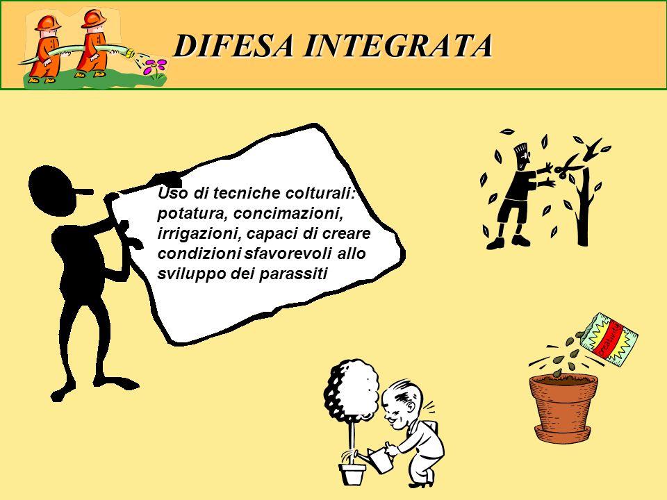 DIFESA INTEGRATA Uso di tecniche colturali: potatura, concimazioni, irrigazioni, capaci di creare condizioni sfavorevoli allo sviluppo dei parassiti.