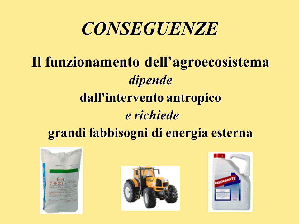 CONSEGUENZE Il funzionamento dell'agroecosistema dipende