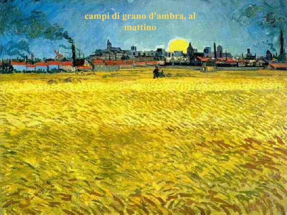 campi di grano d ambra, al mattino