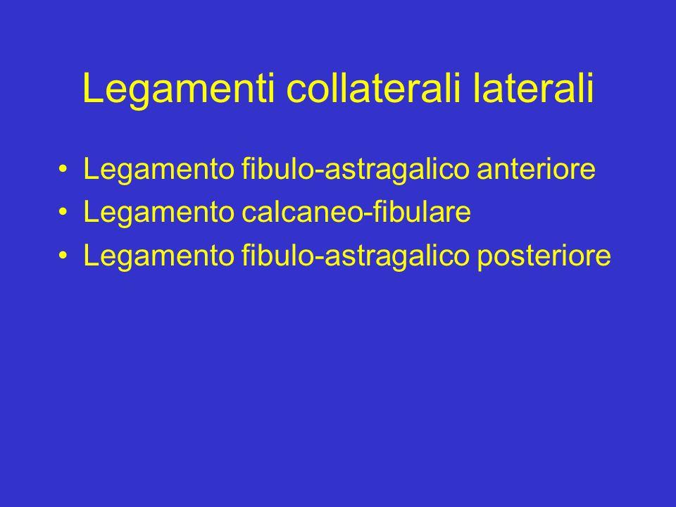 Legamenti collaterali laterali