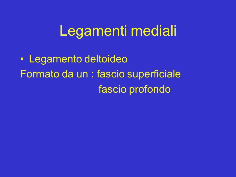 Legamenti mediali Legamento deltoideo