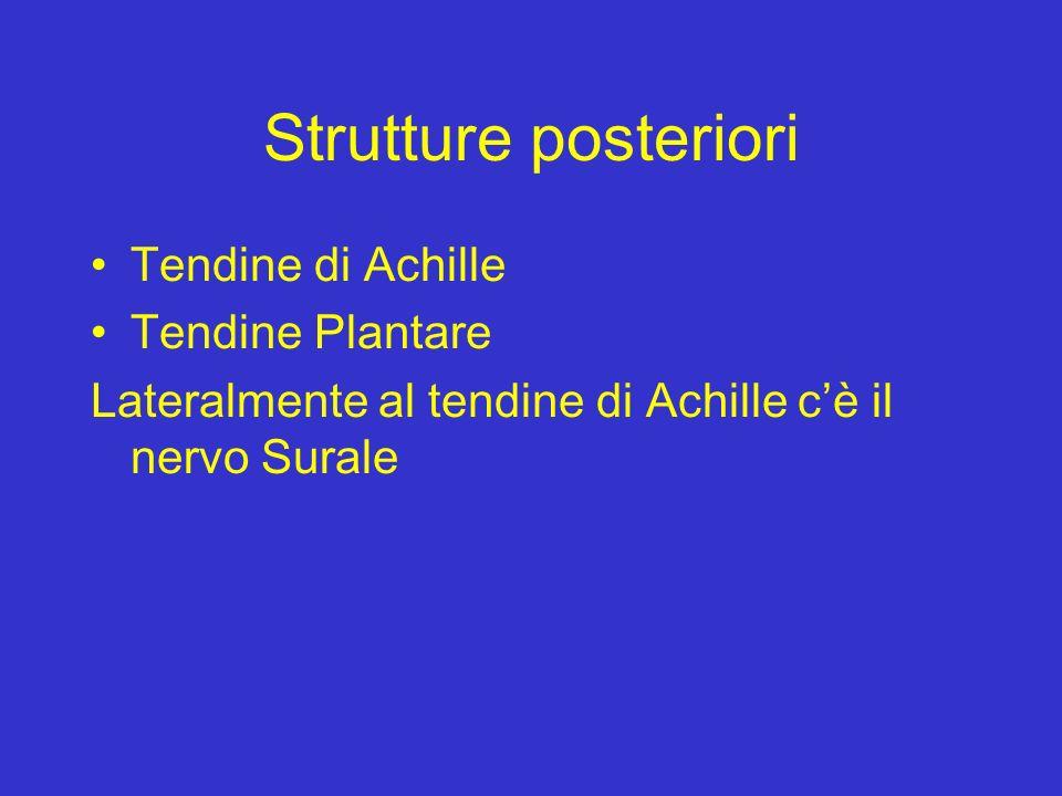 Strutture posteriori Tendine di Achille Tendine Plantare