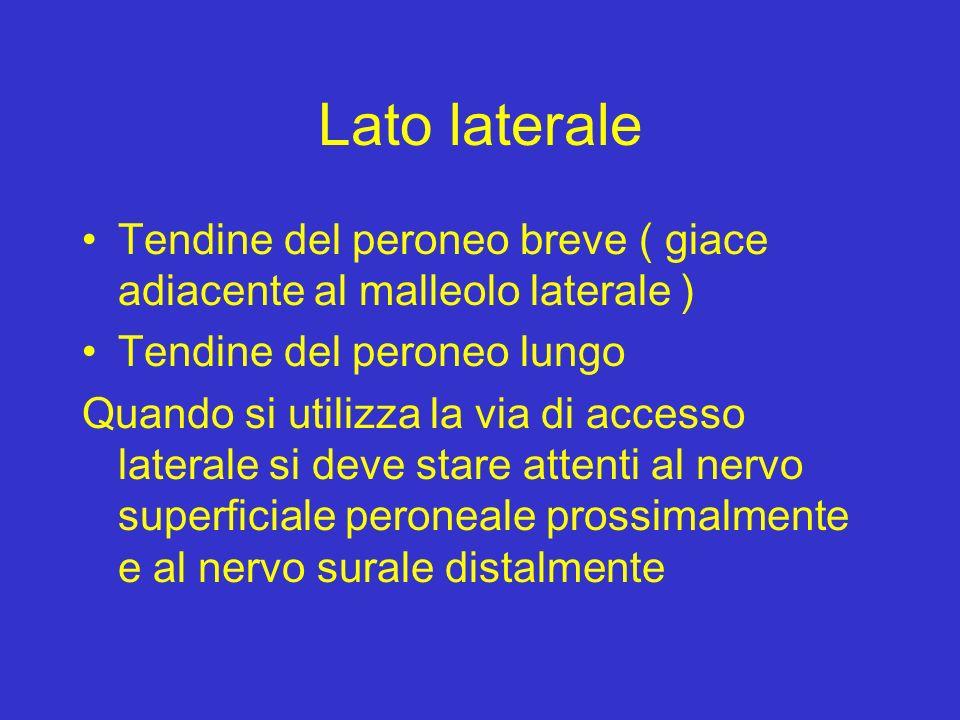 Lato laterale Tendine del peroneo breve ( giace adiacente al malleolo laterale ) Tendine del peroneo lungo.