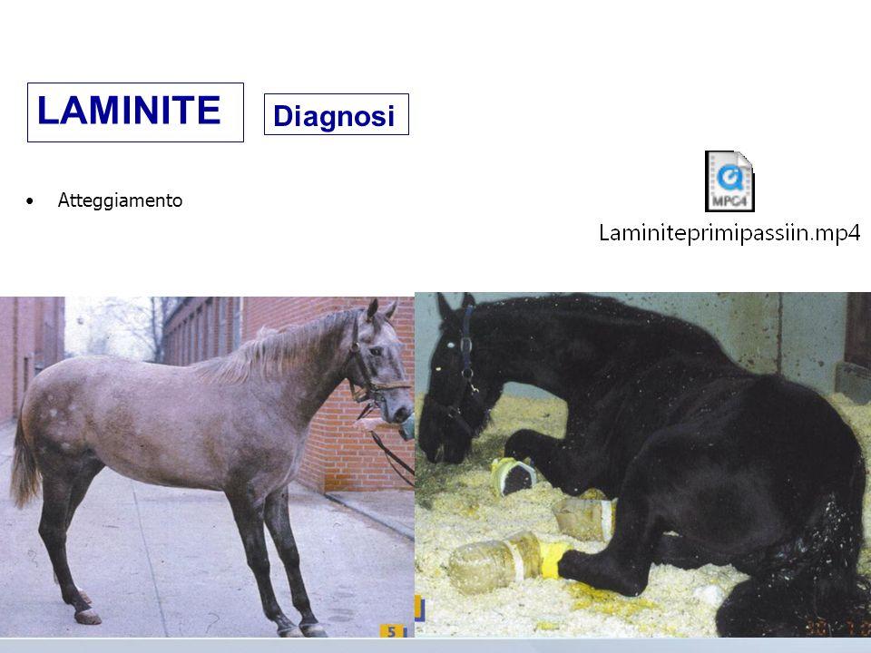 LAMINITE Diagnosi Atteggiamento