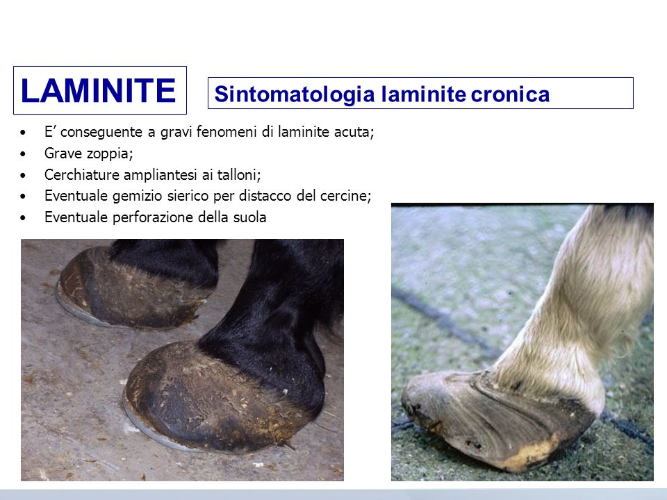 LAMINITE Sintomatologia laminite cronica