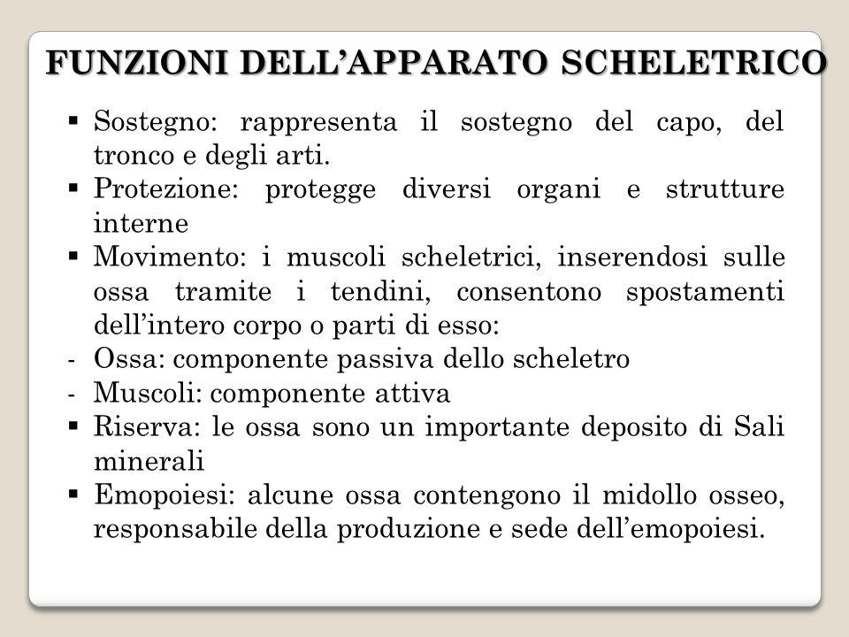 FUNZIONI DELL'APPARATO SCHELETRICO