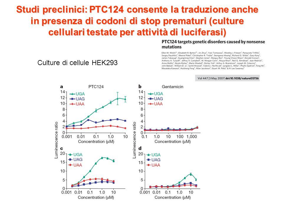 Studi preclinici: PTC124 consente la traduzione anche in presenza di codoni di stop prematuri (culture cellulari testate per attività di luciferasi)