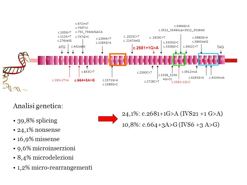 Analisi genetica: 39,8% splicing