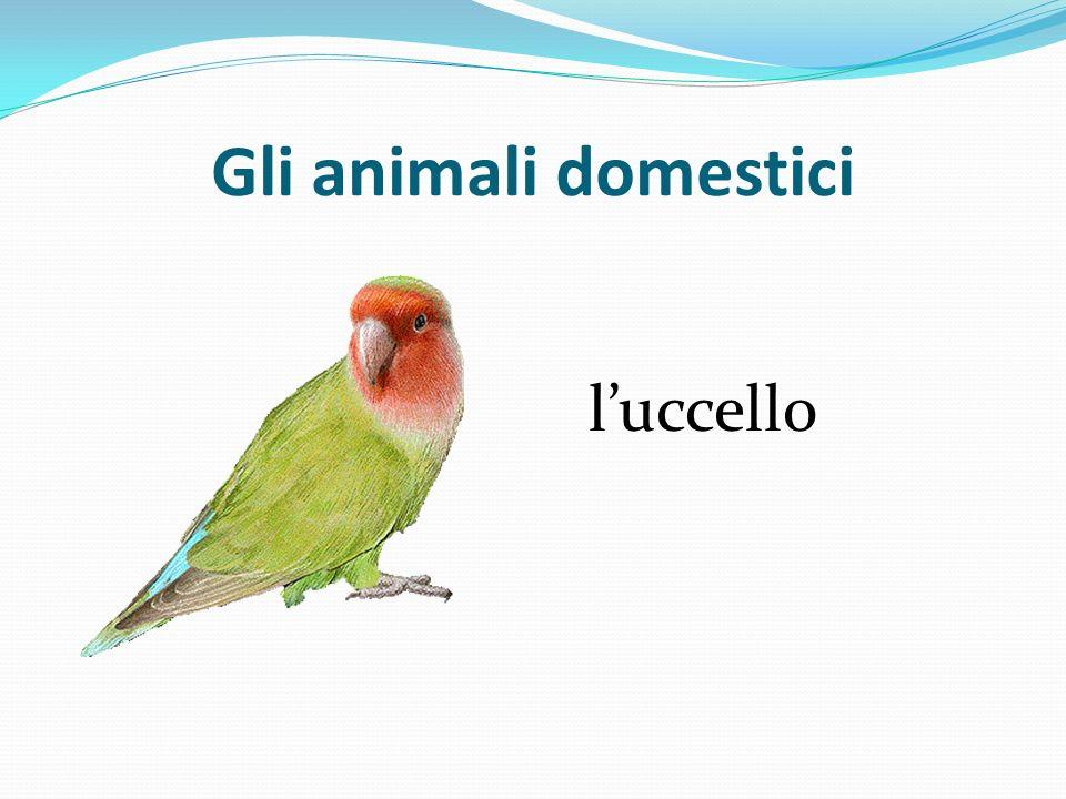 Gli animali domestici l'uccello