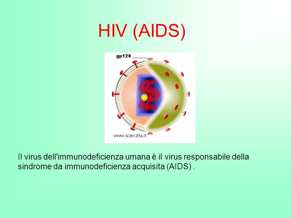 HIV (AIDS) Il virus dell immunodeficienza umana è il virus responsabile della sindrome da immunodeficienza acquisita (AIDS) .